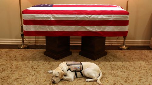 A picture was posted of the yellow Labrador Retriever following Mr Bush's death, mourning him besides his casket.