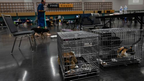 Pets sit in crates at a public cooling shelter set up at the Oregon Convention Center during a heatwave in Portland, Oregon, USA.
