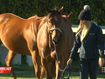 Retired racehorses help troubled youth on path to healing