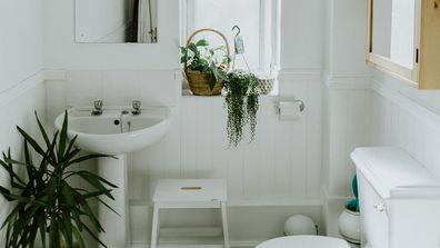 The indoor plants that will thrive in your bathroom