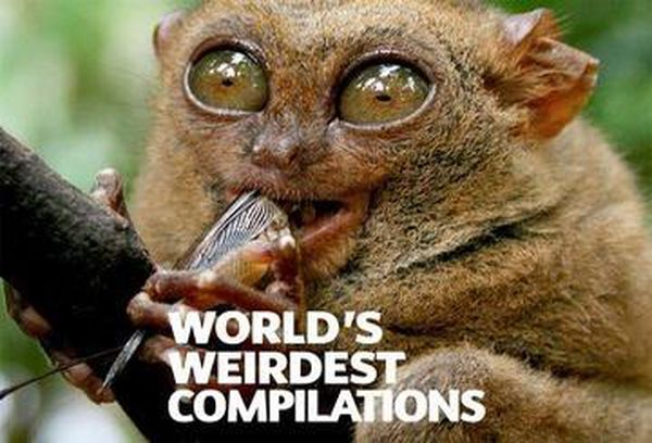World's Weirdest Compilations
