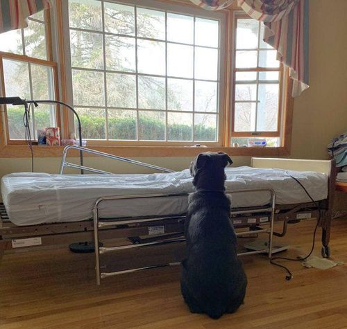 Loyal dog waits by his dead owner's bedside