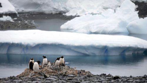 In this Jan. 22, 2015 file photo Gentoo penguins stand on rocks near the Chilean station Bernardo O'Higgins, Antarctica