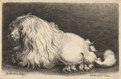 <strong>Poodle</strong>