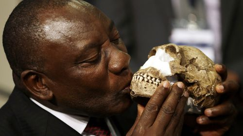 South Africa Deputy President Cyril Ramaphosa with a reconstruction of Homo naledi's face. (AAP)