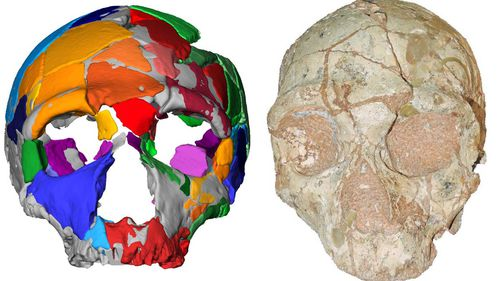 Fossilised skulls provide earliest known evidence of Homo sapiens in Eurasia