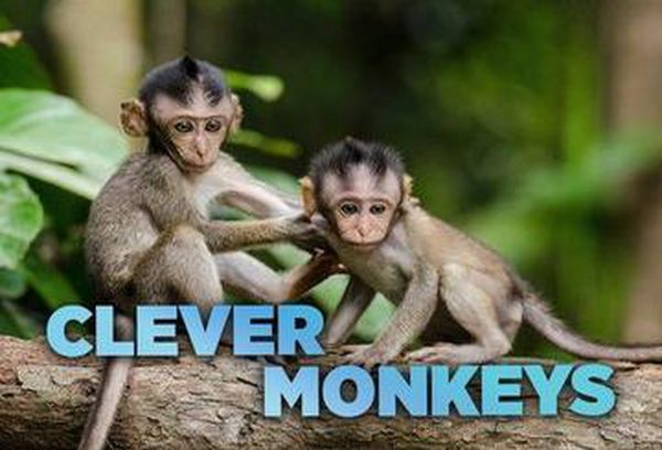 Clever Monkeys