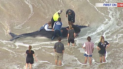 Marine experts from Sea World are assessing the situation. (9NEWS)