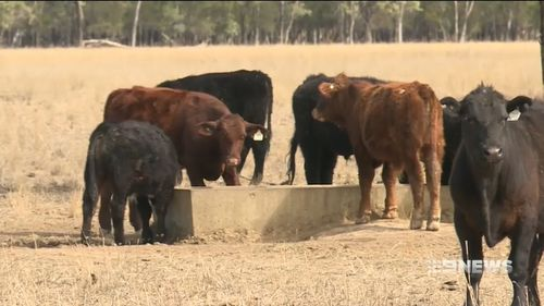 Drought is afflicting large parts of Queensland, New South Wales and Victoria.
