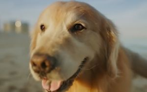 Dog owner spends $8.9m on Super Bowl ad to thank vets for saving his pet