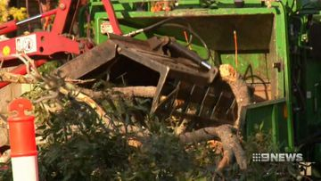 Perth council to tax residents who chop down trees