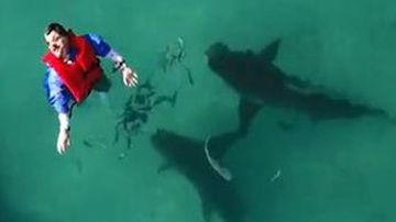 Anti-shark device tested on feared ocean predators