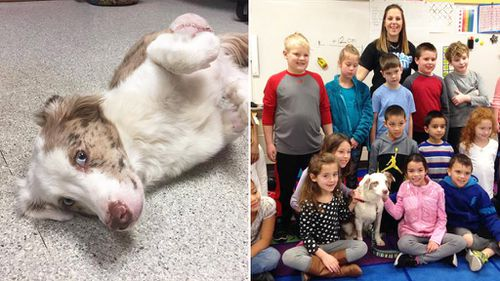 Young students raise almost $600 for shelter dog's surgery