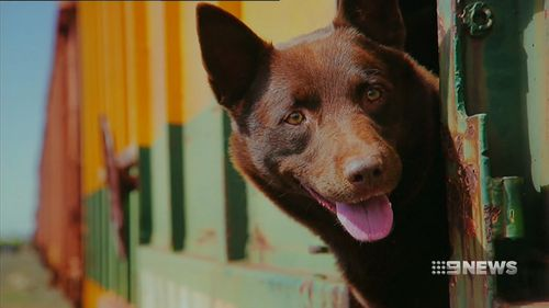 "A moment from ""Red Dog"". (9NEWS)"