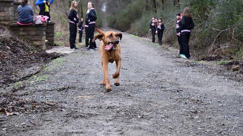 Dog accidentally runs US half-marathon, finishes in an impressive seventh place