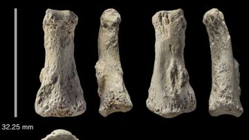 Discovery of  85,000-year-old finger bone fossil rewrites human history