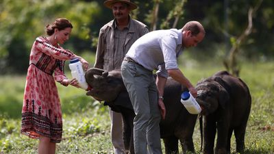 <p>William and Kate feed orphaned baby elephants at the Centre for Wildlife Rehabilitation and Conservation in Kaziranga National Park. </p>