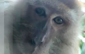 Primate monkeys around with student's phone, takes selfies