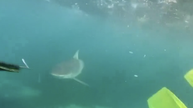 A teenager has filmed the heart stopping moment a shark chased her brother and herself through waters on the NSW South Coast. (Taia Hanley)