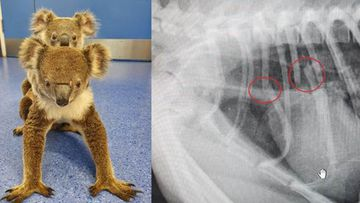 Fluffy and Andy with split image of Fluffy x-ray.