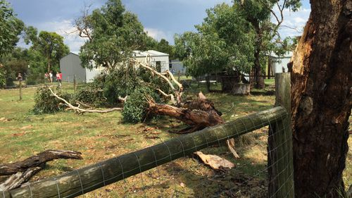 Severe thunderstorms wreak havoc across Victoria