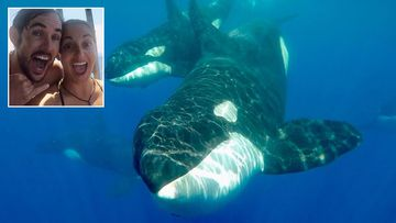 Aussie teacher comes face to face with killer whales