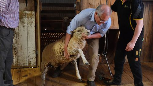 Scott Morrison brings out a sheep to be shorn at a farm north of Dubbo.