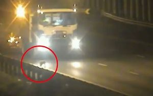 Warning to motorists as koala brings one of Brisbane's busiest motorways to a standstill
