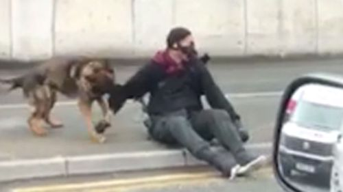 A police dog tackled him to the ground and clamped down on his right arm, causing minor injuries.