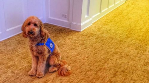 Funeral home uses therapy dog to bring comfort to grieving families