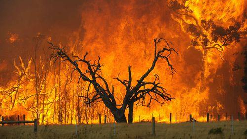 New report upgrades Victoria's bushfire outlook to major