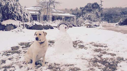 A dog sits with a snowman on a property in the Queensland town of Stanthorpe, transformed into a winter wonderland as the sunshine state cops what could be its largest snowfall since 1984. (AAP)