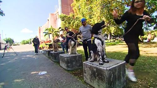 """Another attraction that's gone to the dogs is the Brisbane Powerhouse, playing host to a showcase called """"Let's Be Friends Furever"""", featuring the unsung heroes of COVID lockdown."""