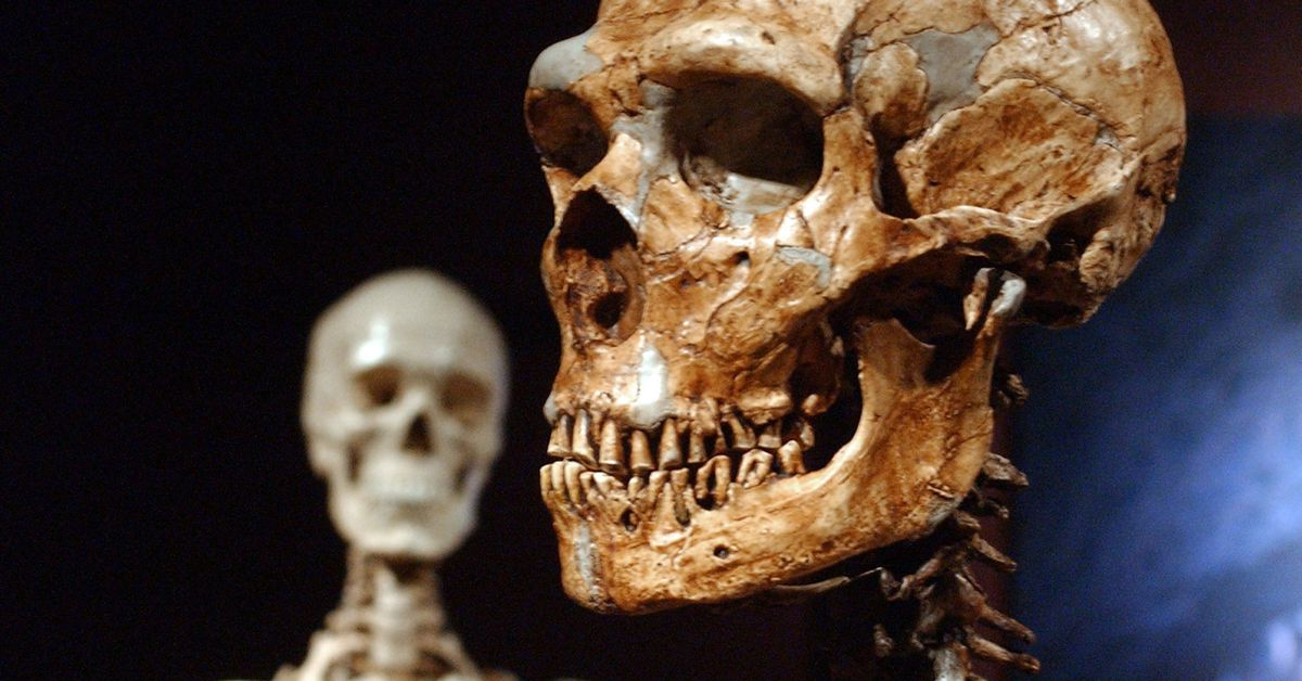 Did Neanderthals bury the dead? 41000-year-old discovery may solve mystery – 9News