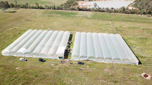 Raids uncovered 11,795 cannabis plants. (Queensland Police Service)