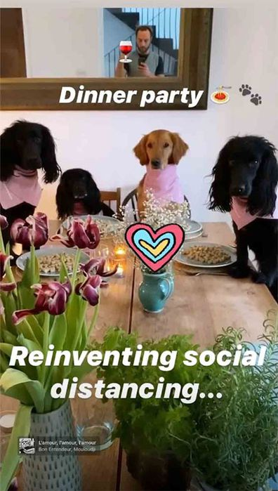 James Middleton Instagram story with his dogs