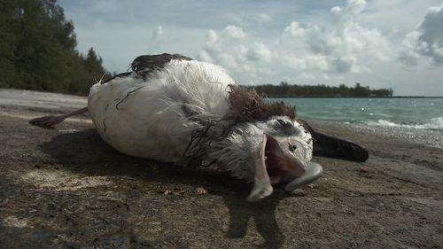 Filmmaker Chris Jordan has spent years chronicling the impact of pollution on wildlife. Picture: Chris Jordan