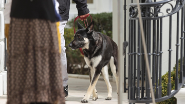 The Bidens' dog Major has been involved in another biting incident that required medical attention