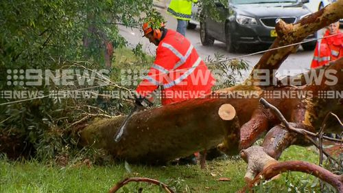 SES works to clear the fallen gumtree.