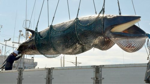 Japan says it intends to resume whale hunt this year