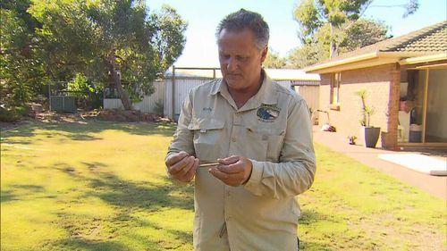 Snake catchers are receiving dozens of calls a day due to ideal breeding conditions (9NEWS)