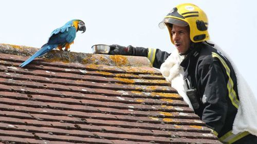Potty-mouthed parrot greets rescuer with four-letter tirade