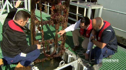 Defence scientists and researchers and Melbourne's Swinburne University are behind the new technology to combat biofouling.