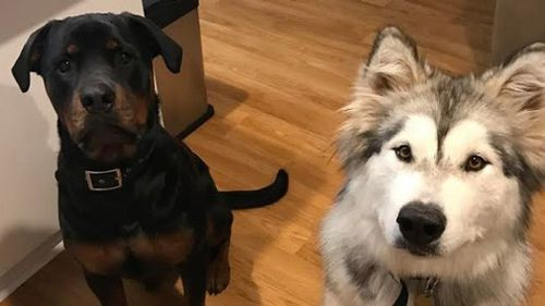 Koda and Tikaani died after eating meat which is believed to have been poisoned. (Supplied)