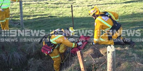 Rescuers worked for hours to winch the pup to safety. Picture: 9NEWS
