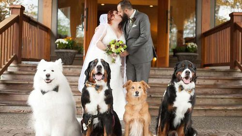 Four dogs become wedding guests of honour joining bride and groom for first dance