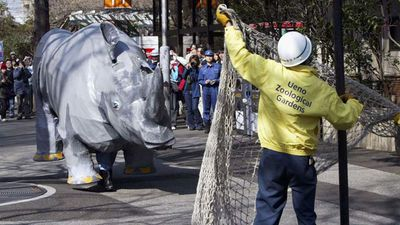 Employees of Tokyo's Ueno Zoo tried to catch the rhino with a net.