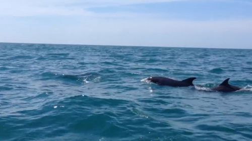 While bottlenose dolphins are common in the area, the rowers got a serious surprise. (9NEWS)