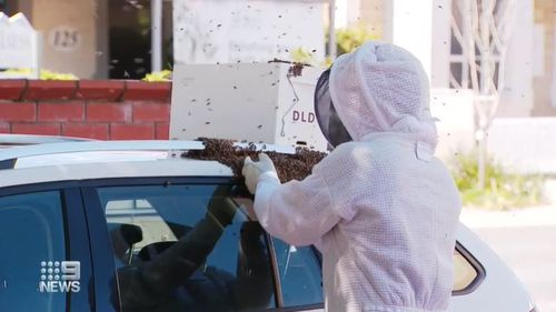 Thousands of bees have created a headache for a woman at an Adelaide cafe strip after the bees swarmed on her car.