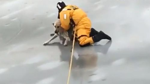 The video of the rescue has been viewed more than 100,000 times.